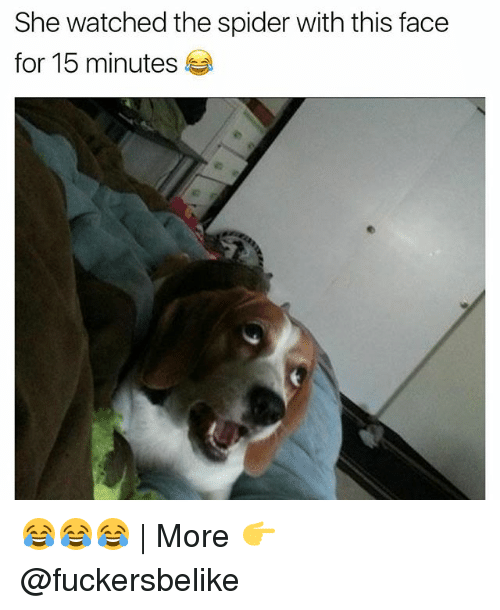 Funny, Spider, and She: She watched the spider with this face  for 15 minutes 😂😂😂 | More 👉 @fuckersbelike