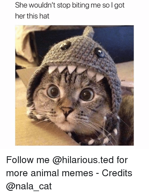 Funny, Memes, and Ted: She wouldn't stop biting me so l got  her this hat Follow me @hilarious.ted for more animal memes - Credits @nala_cat