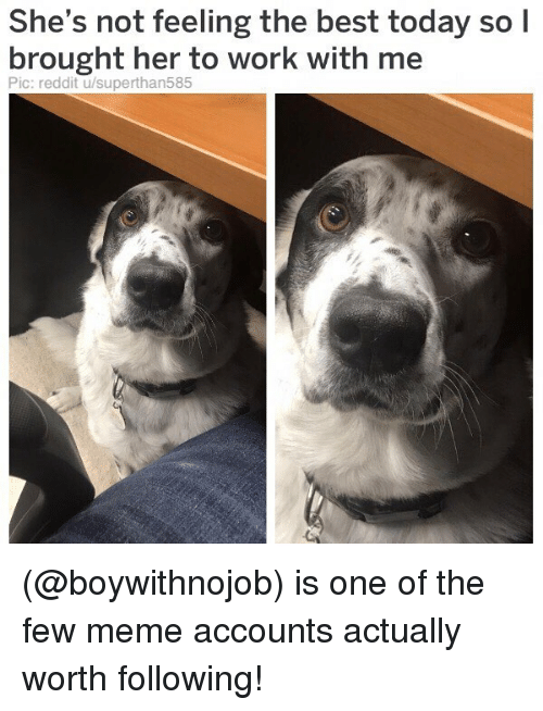 Meme, Memes, and Reddit: She's not feeling the best today so l  brought her to work with me  Pic: reddit u/superthan585 (@boywithnojob) is one of the few meme accounts actually worth following!