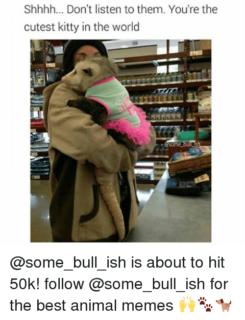 Memes, Animal, and Best: Shhhh... Don't listen to them. You're the  cutest kitty in the world  Some @some_bull_ish is about to hit 50k! follow @some_bull_ish for the best animal memes 🙌🐾🐕