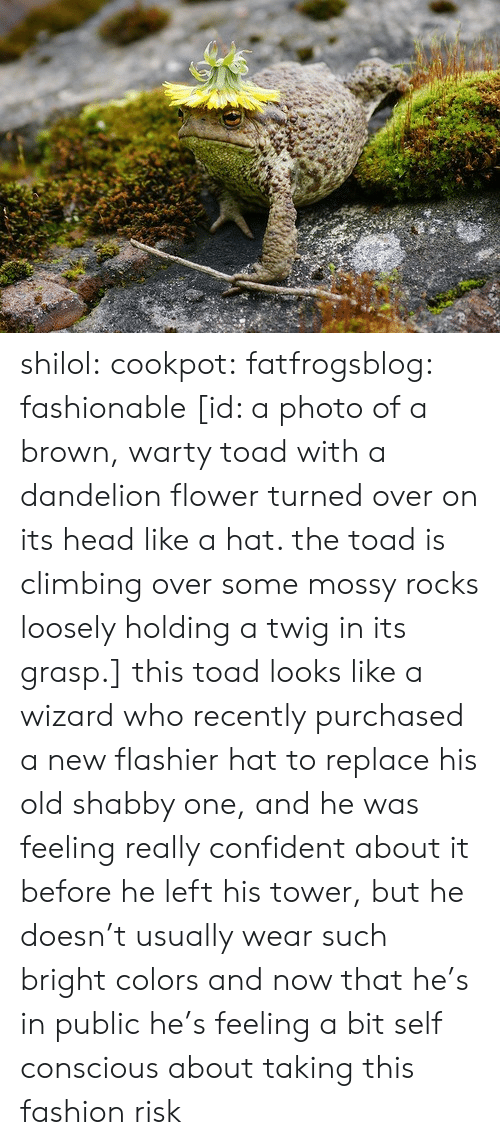 Climbing: shilol: cookpot:  fatfrogsblog: fashionable [id: a photo of a brown, warty toad with a dandelion flower turned over on its head like a hat. the toad is climbing over some mossy rocks loosely holding a twig in its grasp.]   this toad looks like a wizard who recently purchased a new flashier hat to replace his old shabby one, and he was feeling really confident about it before he left his tower, but he doesn't usually wear such bright colors and now that he's in public he's feeling a bit self conscious about taking this fashion risk