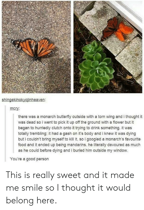 Kill It: shingekinokyojinheaven:  mcry  there was a monarch butterfly outside with a torn wing and i thought it  was dead so i went to pick it up off the ground with a flower but it  began to hurriedly clutch onto it trying to drink something. it was  totally trembling, it had a gash on it's body and i knew it was dying  but i couldn't bring myself to kill it, so i googled a monarch's favourite  food and it ended up being mandarins. he literally devoured as much  as he could before dying and i buried him outside my window.  You're a good person This is really sweet and it made me smile so I thought it would belong here.