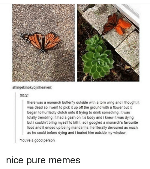 Food, Memes, and Butterfly: shingekinokyojinheaven  mery:  there was a monarch butterfly outside with a torn wing and i thought it  was dead so i went to pick it up off the ground with a flower but it  began to hurriedly clutch onto it trying to drink something. it was  totally trembling: it had a gash on it's body and iknew it was dying  buticouldn't bring myself to kill it, so i googled a monarch's favourite  food and it ended up being mandarins. he literally devoured as much  as he could before dying and i buried him outside my window.  You're a good person nice pure memes