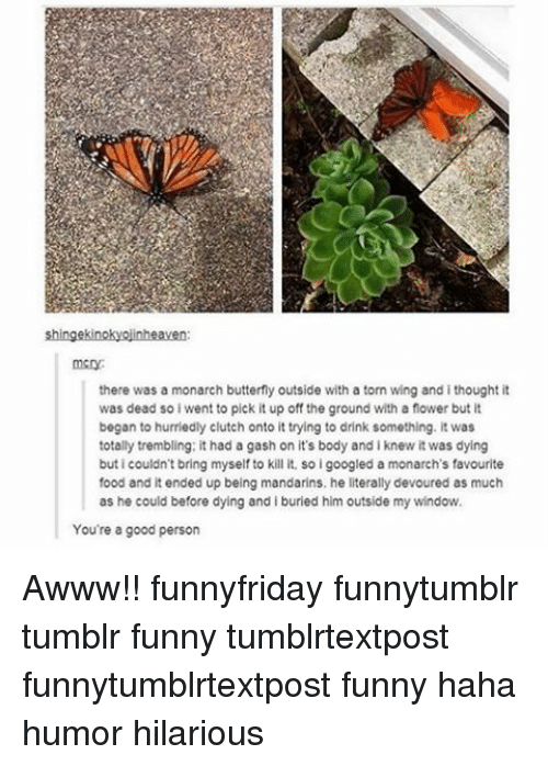 Food, Funny, and Memes: shingekinokyojinheaven:  there was a monarch butterfly outside with a torn wing and i thought it  was dead so i went to pick it up off the ground with a fower but it  began to hurriedly clutch onto it trying to drink something. it was  totally trembling: it had a gash on it's body and i knew it was dying  buticouldn't bring myself to kill it. soigoogled a monarch's favourite  food and it ended up being mandarins. he literally devoured as much  as he could before dying and i buried him outside my window.  You're a good person Awww!! funnyfriday funnytumblr tumblr funny tumblrtextpost funnytumblrtextpost funny haha humor hilarious