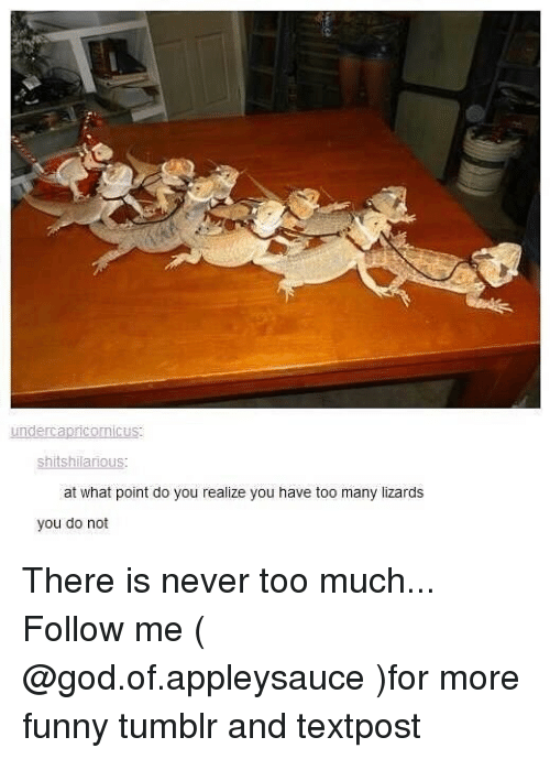 Funny, God, and Memes: shitshilarious  at what point do you realize you have too many lizards  you do not There is never too much... Follow me ( @god.of.appleysauce )for more funny tumblr and textpost