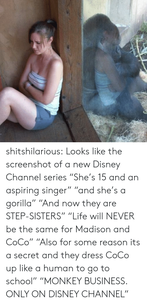 """Disney Channel: shitshilarious:  Looks like the screenshot of a new Disney Channel series """"She's 15 and an aspiring singer"""" """"and she's a gorilla"""" """"And now they are STEP-SISTERS"""" """"Life will NEVER be the same for Madison and CoCo"""" """"Also for some reason its a secret and they dress CoCo up like a human to go to school"""" """"MONKEY BUSINESS. ONLY ON DISNEY CHANNEL"""""""