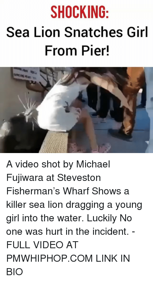 Memes, Girl, and Link: SHOCKING  Sea Lion Snatches Girl  From Pier! A video shot by Michael Fujiwara at Steveston Fisherman's Wharf Shows a killer sea lion dragging a young girl into the water. Luckily No one was hurt in the incident. - FULL VIDEO AT PMWHIPHOP.COM LINK IN BIO