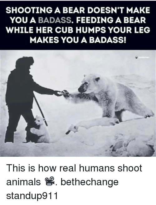 Animals, Memes, and Bear: SHOOTING A BEAR DOESN'T MAKE  YOU A BADASS  FEEDING A BEAR  WHILE HER CUB HUMPS YOUR LEG  MAKES YOU A BADASS! This is how real humans shoot animals 📽. bethechange standup911