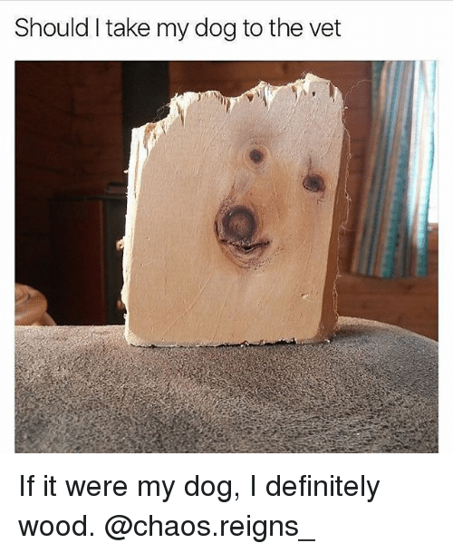 Definitely, Funny, and Girl Memes: Should I take my dog to the vet If it were my dog, I definitely wood. @chaos.reigns_