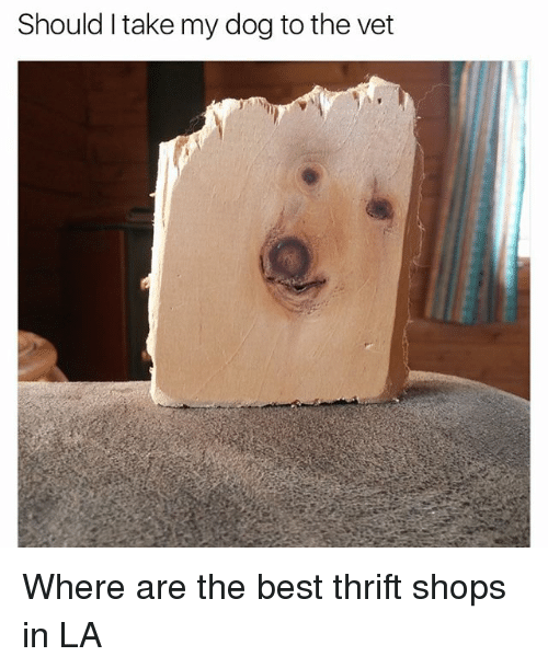 Memes, Best, and 🤖: Should I take my dog to the vet Where are the best thrift shops in LA