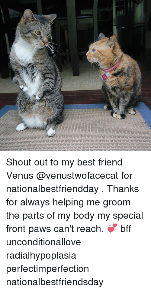 Best Friend, Memes, and Best: Shout out to my best friend Venus @venustwofacecat for nationalbestfriendday . Thanks for always helping me groom the parts of my body my special front paws can't reach. 💞 bff unconditionallove radialhypoplasia perfectimperfection nationalbestfriendsday