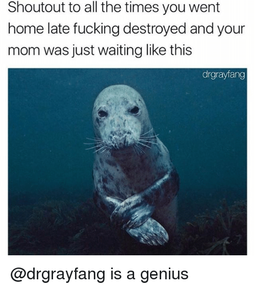 Fucking, Genius, and Home: Shoutout to all the times you went  home late fucking destroyed and your  mom was just waiting like this  drgrayfang @drgrayfang is a genius