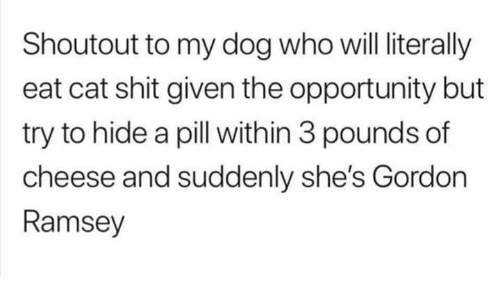 gordon ramsey: Shoutout to my dog who will literally  eat cat shit given the opportunity but  try to hide a pill with in 3 pounds of  cheese and suddenly she's Gordon  Ramsey