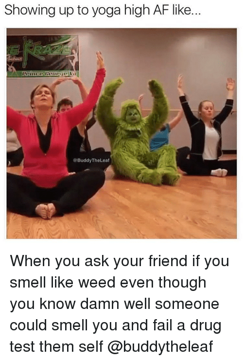 Drug Test, High AF, and Trendy: Showing up to yoga high AF like.  @Buddy The Leaf When you ask your friend if you smell like weed even though you know damn well someone could smell you and fail a drug test them self @buddytheleaf