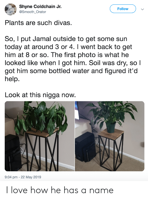 jamal: Shyne Coldchain Jr.  Follow  @Smooth_Orator  Plants are such divas.  So, I put Jamal outside to get some sun  today at around 3 or 4. I went back to get  him at 8 or so. The first photo is what he  looked like when I got him. Soil was dry, so I  got him some bottled water and figured it'd  help.  Look at this nigga now.  9:04 pm -22 May 2019 I love how he has a name