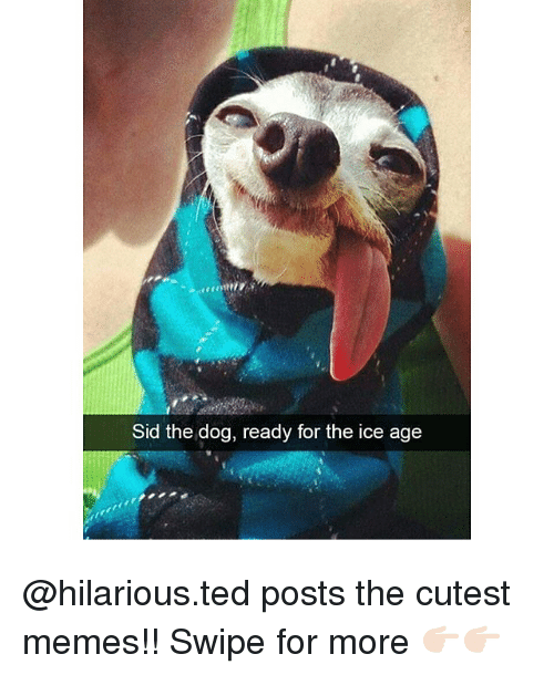 Memes, Ted, and Sid: Sid the dog, ready for the ice age @hilarious.ted posts the cutest memes!! Swipe for more 👉🏻👉🏻