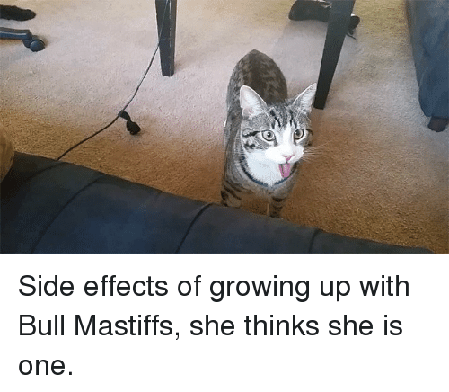 Funny, Side Effects, and Mastiff: Side effects of growing up with Bull Mastiffs, she thinks she is one.