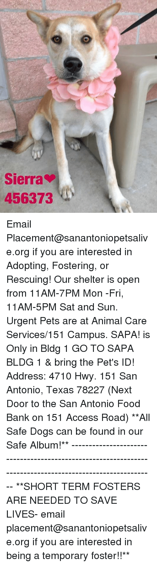 Dogs, Food, and Memes: Sierra  456373 Email Placement@sanantoniopetsalive.org if you are interested in Adopting, Fostering, or Rescuing!  Our shelter is open from 11AM-7PM Mon -Fri, 11AM-5PM Sat and Sun.  Urgent Pets are at Animal Care Services/151 Campus. SAPA! is Only in Bldg 1 GO TO SAPA BLDG 1 & bring the Pet's ID! Address: 4710 Hwy. 151 San Antonio, Texas 78227 (Next Door to the San Antonio Food Bank on 151 Access Road)  **All Safe Dogs can be found in our Safe Album!** ---------------------------------------------------------------------------------------------------------- **SHORT TERM FOSTERS ARE NEEDED TO SAVE LIVES- email placement@sanantoniopetsalive.org if you are interested in being a temporary foster!!**