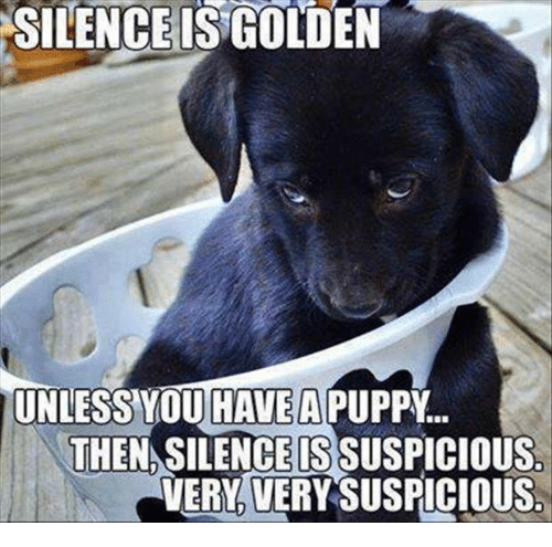 silence is golden unless you have a then silenceissuspicious verloverysuspicious 20960022 🔥 25 best memes about silence is golden silence is golden memes,Silence Memes