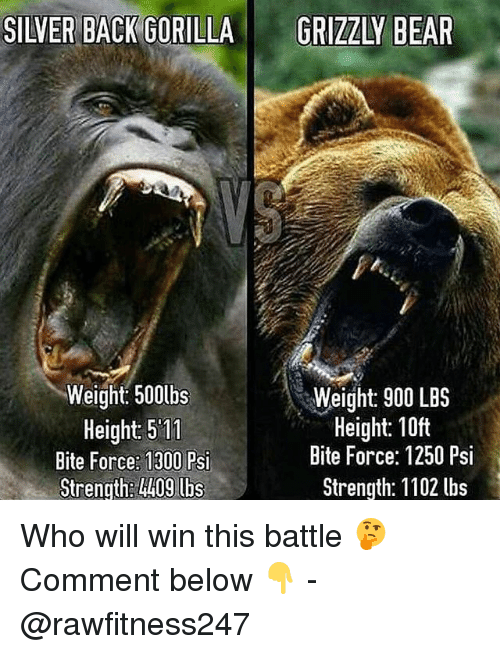 Memes, Bear, and Silver: SILVER BACK GORILLA  GRIZZLY BEAR  Weight: 500lbs  Height: 511  Bite Force: 1300 Psi  Strength: l409 lbs  Weight: 900 LBS  Height: 10ft  Bite Force: 1250 Psi  Strength: 1102 lbs Who will win this battle 🤔 Comment below 👇 - @rawfitness247