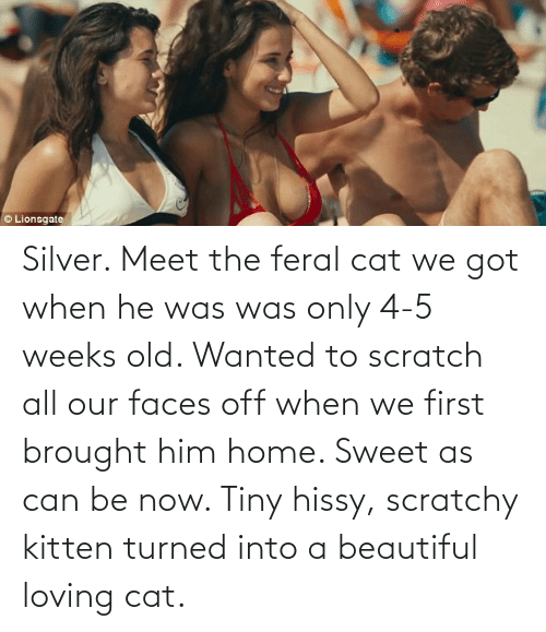Silver: Silver. Meet the feral cat we got when he was was only 4-5 weeks old. Wanted to scratch all our faces off when we first brought him home. Sweet as can be now. Tiny hissy, scratchy kitten turned into a beautiful loving cat.