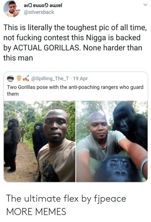 Rangers: @silverxback  This is literally the toughest pic of all time,  not fucking contest this Nigga is backed  by ACTUAL GORILLAS. None harder than  this man  aSpilling.The_T 19 Apr  Two Gorillas pose with the anti-poaching rangers who guard  them The ultimate flex by fjpeace MORE MEMES