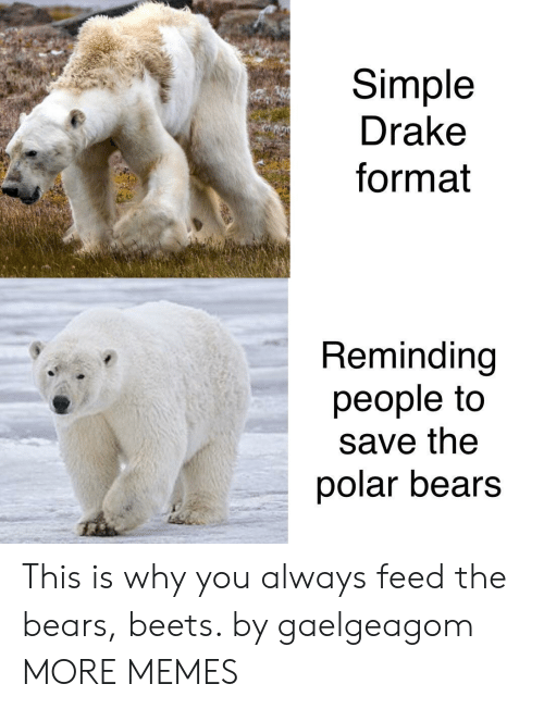 beets: Simple  Drake  format  Reminding  people to  save the  polar bears This is why you always feed the bears, beets. by gaelgeagom MORE MEMES