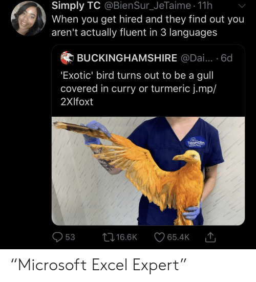 """Excel: Simply TC @BienSur_JeTaime 11h  When you get hired and they find out you  aren't actually fluent in 3 languages  BUCKINGHAMSHIRE @Dai... 6d  'Exotic' bird turns out to be a gull  covered in curry or turmeric j.mp/  2Xlfoxt  Tiggyawinkdes  Wildlife Nune  L16.6K  53  65.4K """"Microsoft Excel Expert"""""""