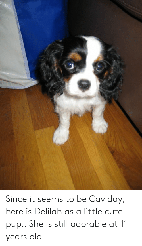 cav: Since it seems to be Cav day, here is Delilah as a little cute pup.. She is still adorable at 11 years old