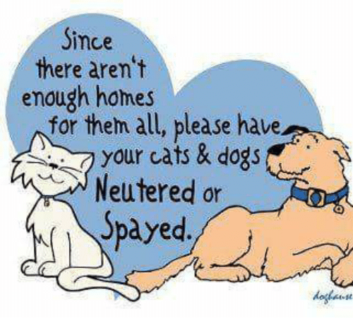 cat dog: Since  there aren't  enough homes  for them all, please have  your cats & dogs  Neutered or  Spayed