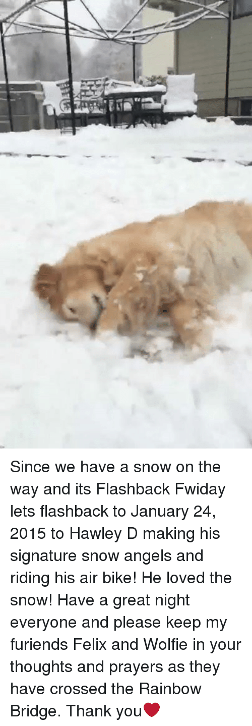 Memes, 2015, and Angel: Since we have a snow on the way and its Flashback Fwiday lets flashback to January 24, 2015 to Hawley D making his signature snow angels and riding his air bike! He loved the snow! Have a great night everyone and please keep my furiends Felix and Wolfie in your thoughts and prayers as they have crossed the Rainbow Bridge. Thank you❤️