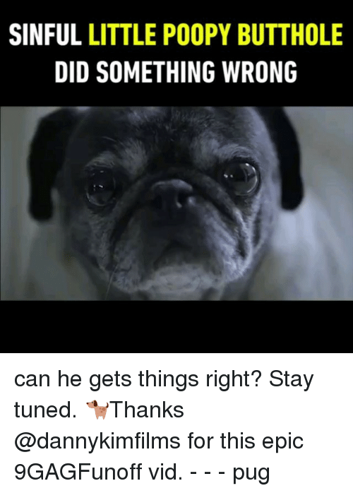 Memes, 🤖, and Epic: SINFUL LITTLE POOPY BUTTHOLE  DID SOMETHING WRONG can he gets things right? Stay tuned. 🐕Thanks @dannykimfilms for this epic 9GAGFunoff vid. - - - pug