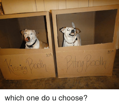 Dogs: sing  104 which one do u choose?