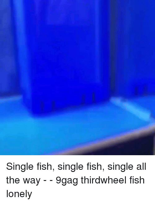 9gag, Memes, and Fish: Single fish, single fish, single all the way - - 9gag thirdwheel fish lonely
