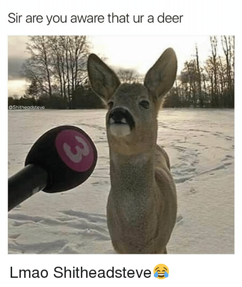 Deer, Lmao, and Memes: Sir are you aware that ur a deer  OShitheadsteve Lmao Shitheadsteve😂