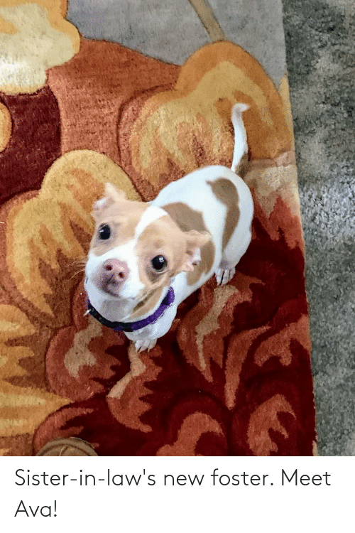 in laws: Sister-in-law's new foster. Meet Ava!
