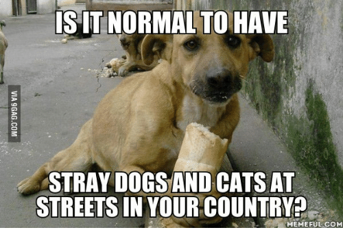 Country Memes: SIT NORMALTO HAVE  STRAY DOGS AND CATS AT  STREETS IN YOUR COUNTRY?  MEMEFUL COM