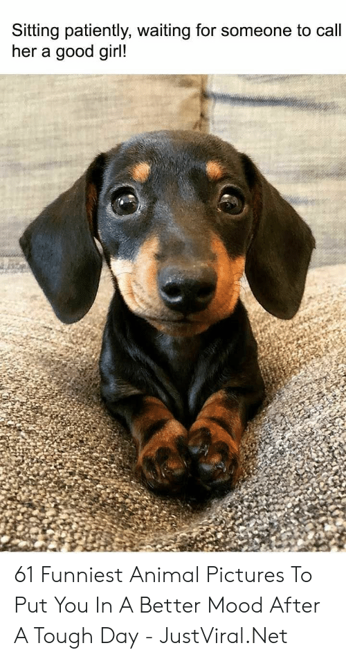 patiently: Sitting patiently, waiting for someone to call  her a good girl! 61 Funniest Animal Pictures To Put You In A Better Mood After A Tough Day - JustViral.Net
