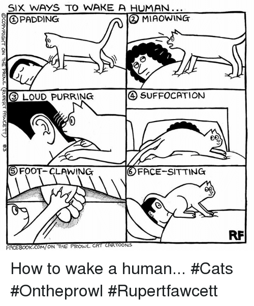 prowl: SIX WAYS TO WAKE A HUMAN...  2 MIAOWING  PADDING  LOUD PURRING  SUFFOCATION  5 FOOT.  LAWING  FACE-SITTING  TOONS  FACEBOOK cowl ON THE PROwL CA How to wake a human... #Cats #Ontheprowl #Rupertfawcett