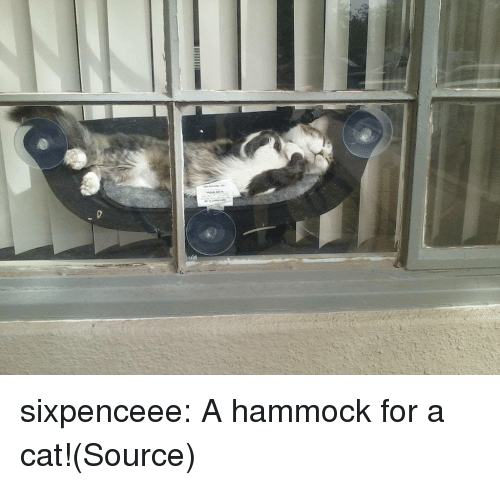 Hammock: sixpenceee:   A hammock for a cat!(Source)