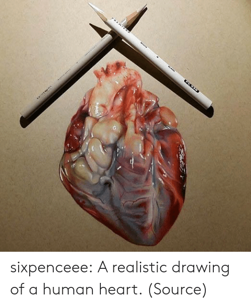 Insanely: sixpenceee: A realistic drawing of a human heart. (Source)