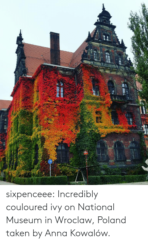 Facebook: sixpenceee: Incredibly couloured ivy on  National Museum in Wroclaw, Poland taken by  Anna Kowalów.