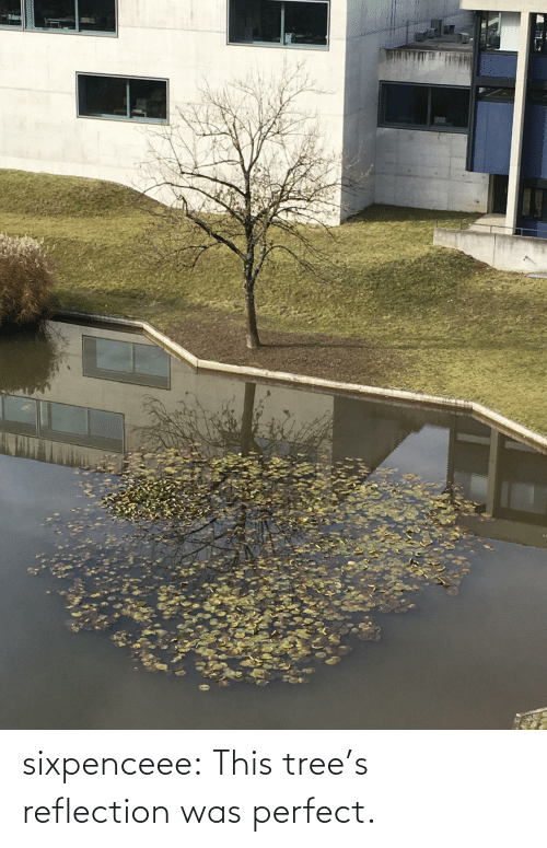 reflection: sixpenceee:  This tree's reflection was perfect.