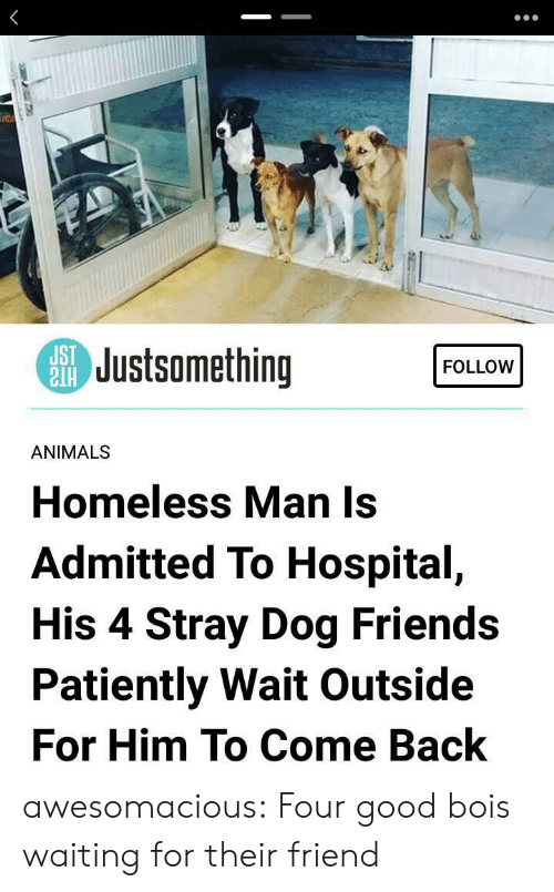 patiently: SJustsomething  FOLLOW  ANIMALS  Homeless Man Is  Admitted To Hospital,  His 4 Stray Dog Friends  Patiently Wait Outside  For Him To Come Back awesomacious:  Four good bois waiting for their friend