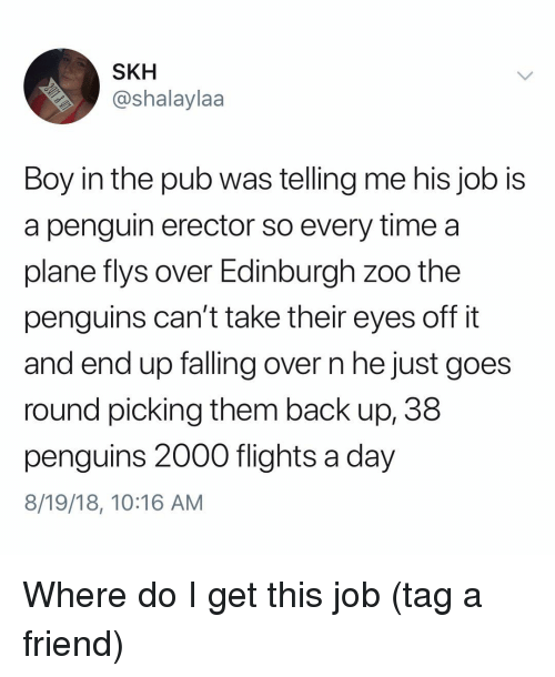 Falling Over: SKH  @shalaylaa  Boy in the pub was telling me his job IS  a penguin erector so every time a  plane flys over Edinburgh zoo the  penguins can't take their eyes off it  and end up falling over n he just goes  round picking them back up, 38  penguins 2000 flights a day  8/19/18, 10:16 AM Where do I get this job (tag a friend)