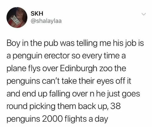 Falling Over: SKH  @shalaylaa  Boy in the pub was telling me his job is  a penguin erector so every time a  plane flys over Edinburgh zoo the  penguins can't take their eyes off it  and end up falling over n he just goes  round picking them back up, 38  penguins 2000 flights a day