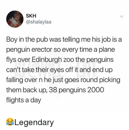 Falling Over: SKH  @shalaylaa  Boy in the pub was telling me his job is a  penguin erector so every time a plane  flys over Edinburgh zoo the penguins  can't take their eyes off it and end up  falling over n he just goes round picking  them back up, 38 penguins 2000  flights a day 😂Legendary