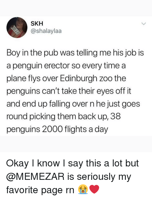 Falling Over: SKH  @shalaylaa  Boy in the pub was telling me his job is  a penguin erector so every time a  plane flys over Edinburgh zoo the  penguins can't take their eyes off it  and end up falling over n he just goes  round picking them back up, 38  penguins 2000 flights a day Okay I know I say this a lot but @MEMEZAR is seriously my favorite page rn 😭❤