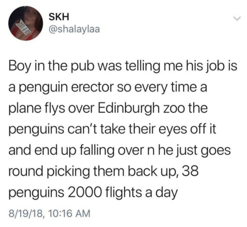 Flights: SKH  @shalaylaa  Boy in the pub was telling me his job is  a penguin erector so every time a  plane flys over Edinburgh zoo the  penguins can't take their eyes off it  and end up falling over n he just goes  round picking them back up, 38  penguins 2000 flights a day  8/19/18, 10:16 AM