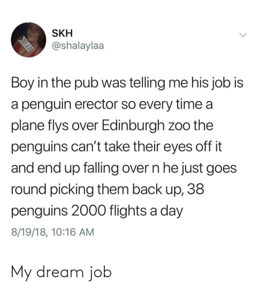 Flights: SKH  @shalaylaa  Boy in the pub was telling me his job is  a penguin erector so every time a  plane flys over Edinburgh zoo the  penguins can't take their eyes off it  and end up falling over n he just goes  round picking them back up, 38  penguins 2000 flights a day  8/19/18, 10:16 AM My dream job